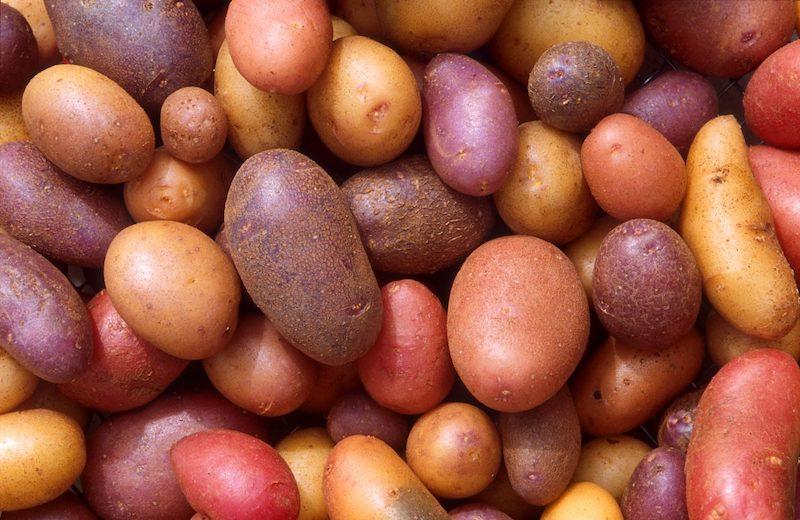 patate senza glutine rosse